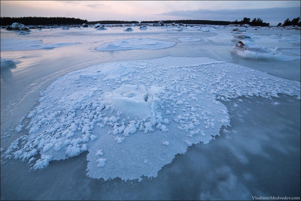 Ледяные розы. Белое море
