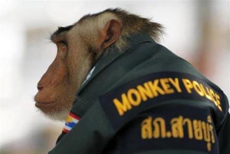 monkey11