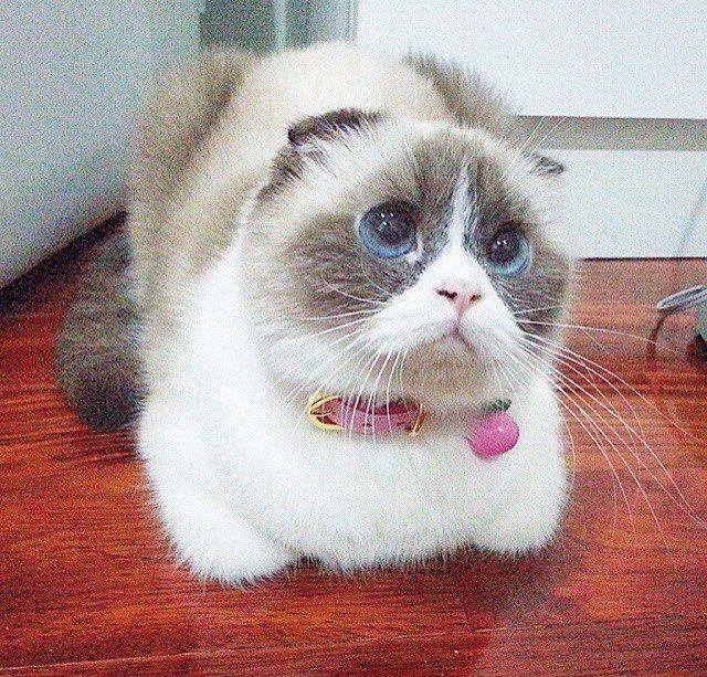 кот с жалобными глазами