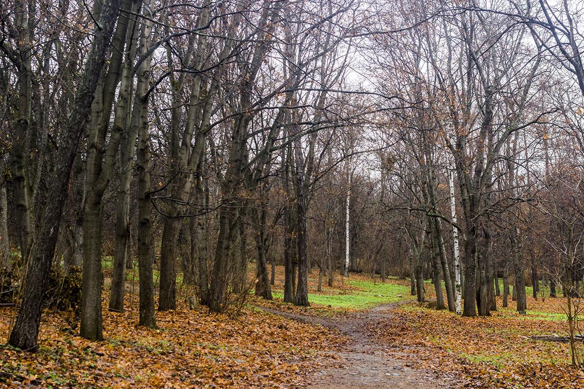 Петрозаводск Парк