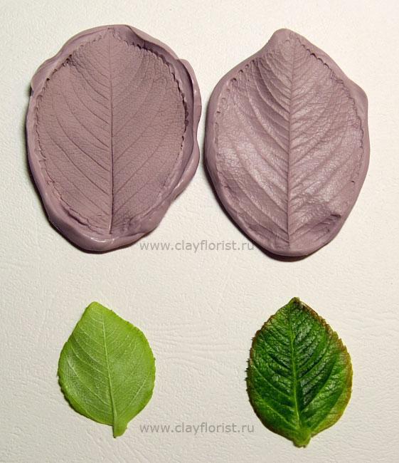 IMG_4322-leaf-n-moldW