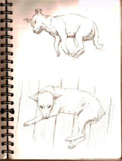 hundedamen
