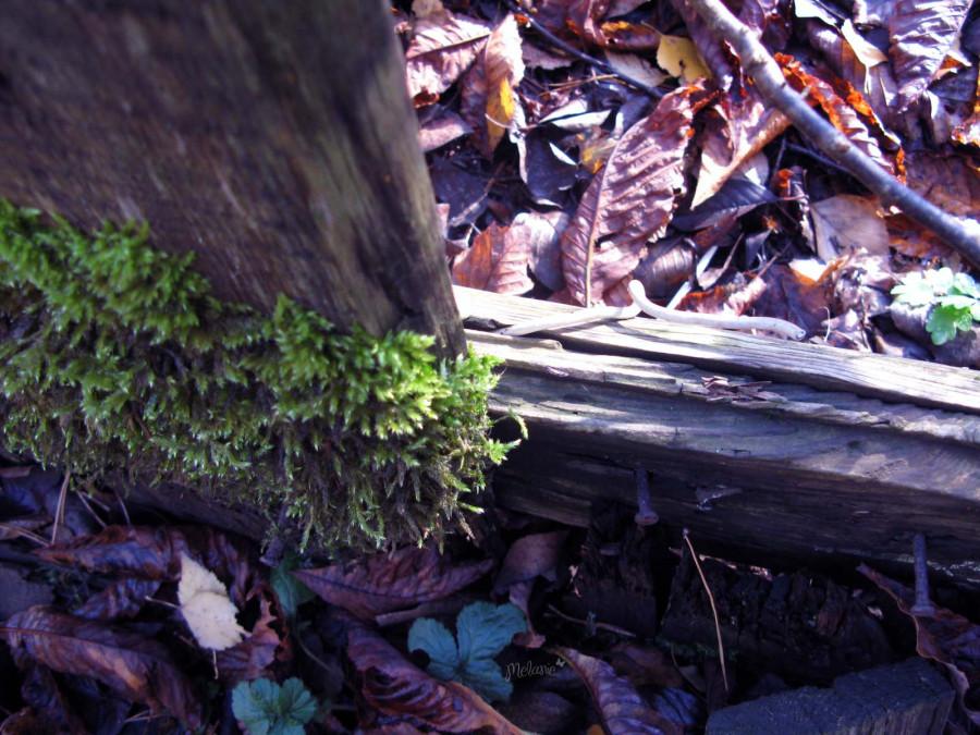 листья-мох