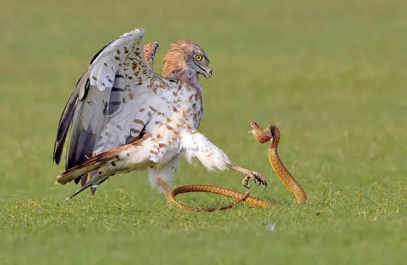 """Пускай ты умер в борьбе со змеем! """"Но в песне смелых и сильных духом всегда ты будешь живым примером,.."""""""
