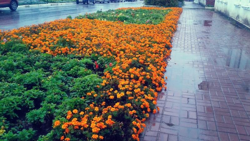 Даже оранжевым цветам грустно под дождём (Фото автора)