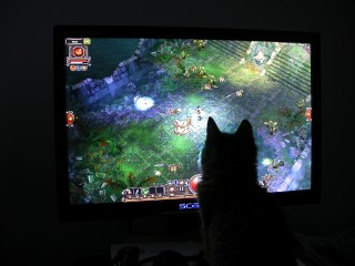 playing Torchlight