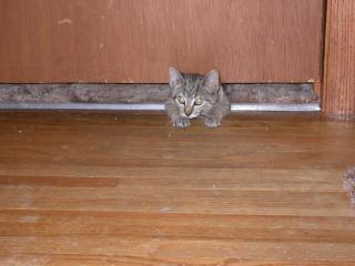 crawling under the door
