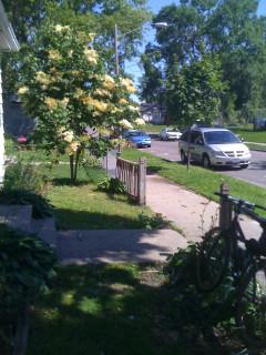 yard east