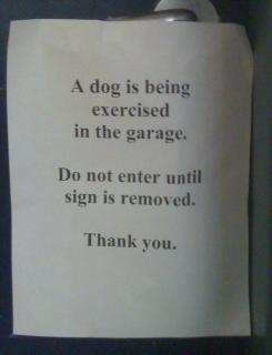 dog delay