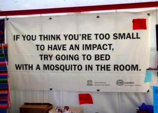 mosquito in the room