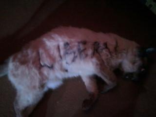 murdered cat