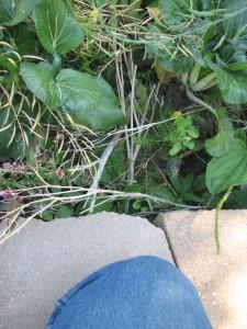 20120930.bokchoi.asparagus.mouse
