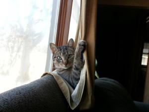 Mike.drapes.1