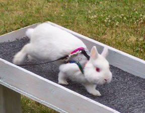 http://www.animalhumanesociety.org/training_rabbit_info.asp