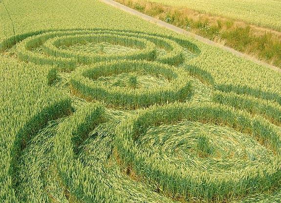 круг на поле в Момале, Бельгия, появился 2.07.2009.
