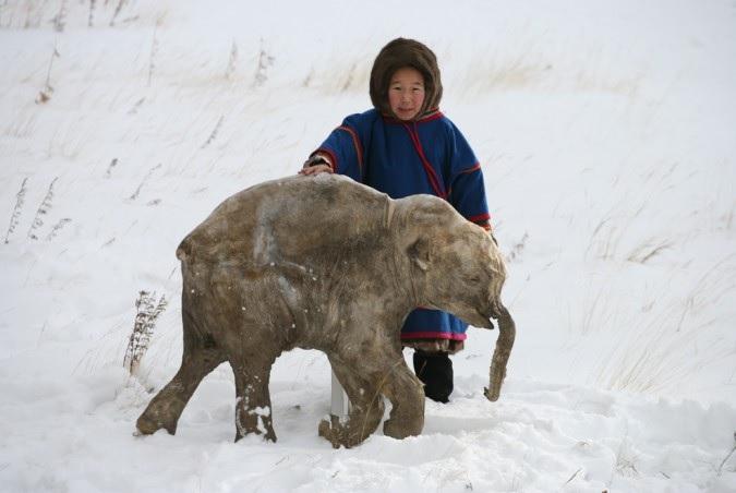 Мамонтёнок Люба был найден в мае 2007 года оленеводом Юрием Худи в верхнем течении реки Юрибей на полуострове Ямал