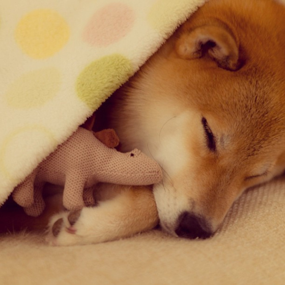 maru-the-most-popular-and-possibly-cutest-dog-in-the-world-19
