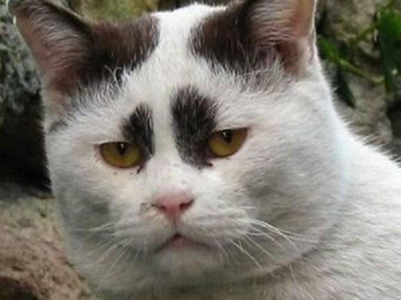 yakuza-cat