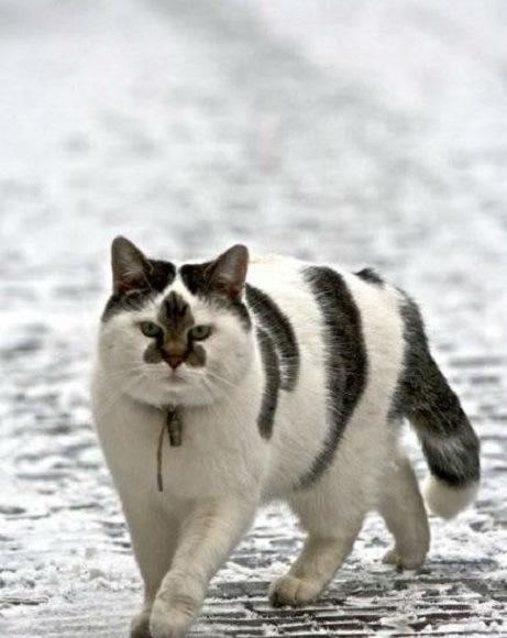 yakuza-cat2