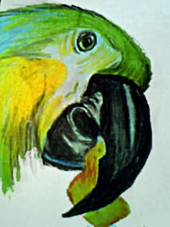 PSD_Parrot