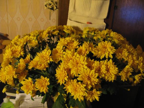 Ведро хризантем