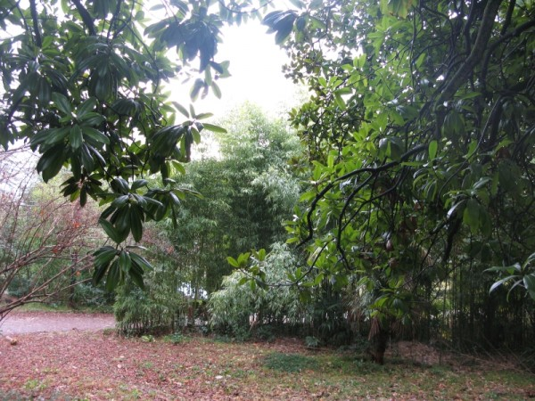 январский парк