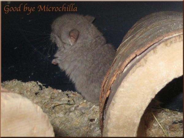 Microchilla