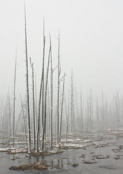 bleak landscape 2