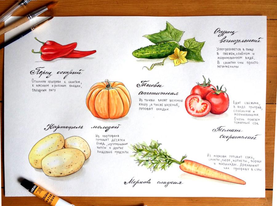 скетч овощи.jpg