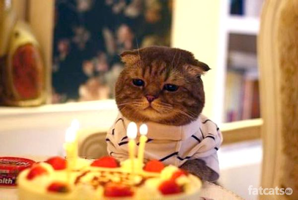 1279785472_cat-happy-birthday-01