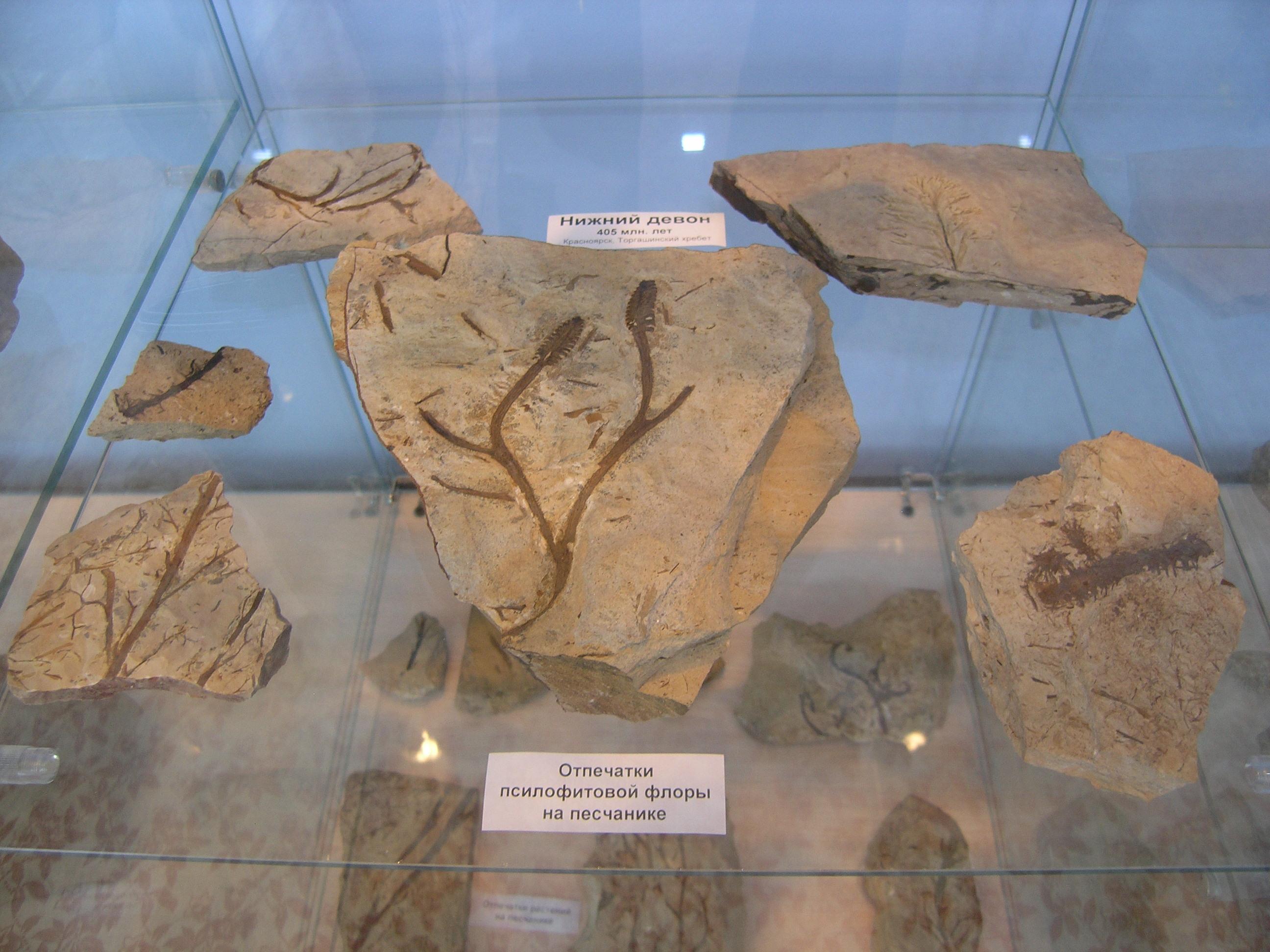Зал палеонтологии - псилофитовая флора