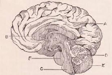 Пять книг о мозге