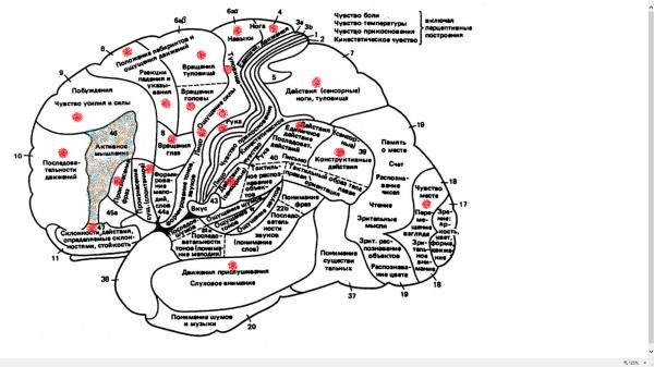 Mobilis in mobile (26) Виды «кодовой» моторики - основы вербального мышления и интеллекта