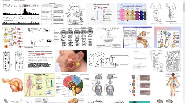 Гомеопатия Кортико висцеральные рефлексы