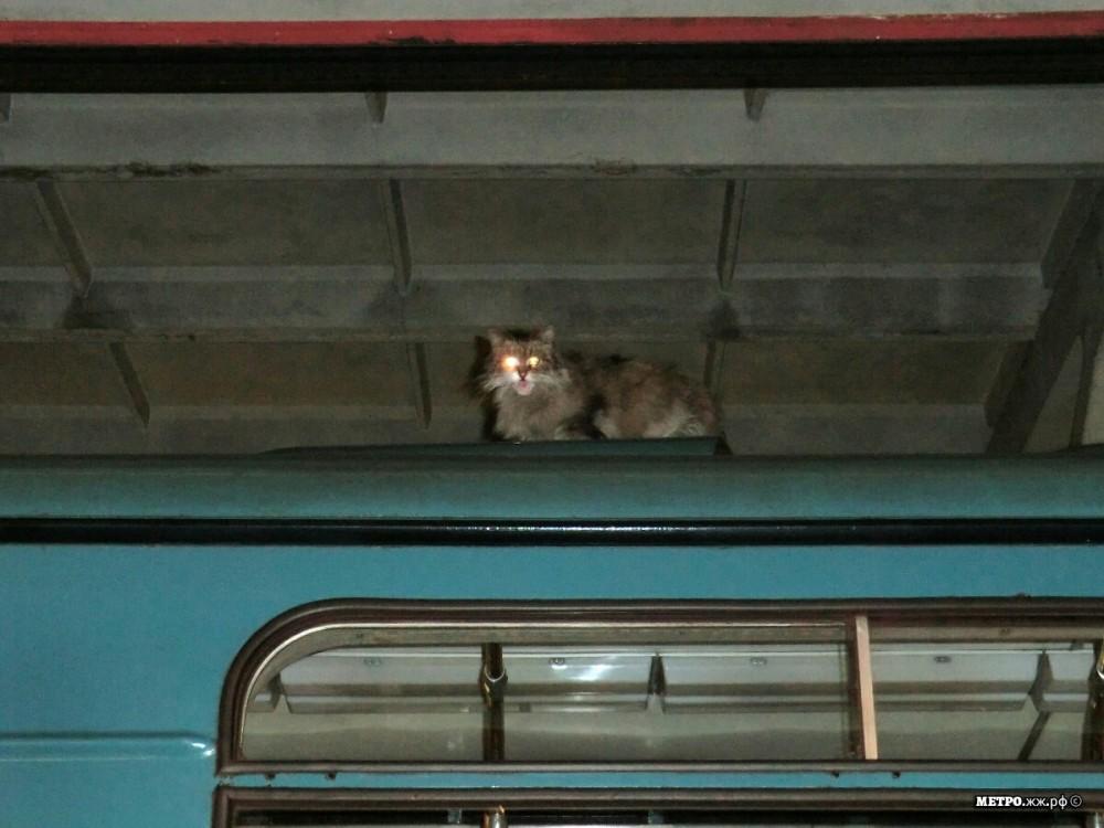 маленький спойлер: «вкусный» промокод на интернет в метро без рекламы для Москвы и Питера в конце поста