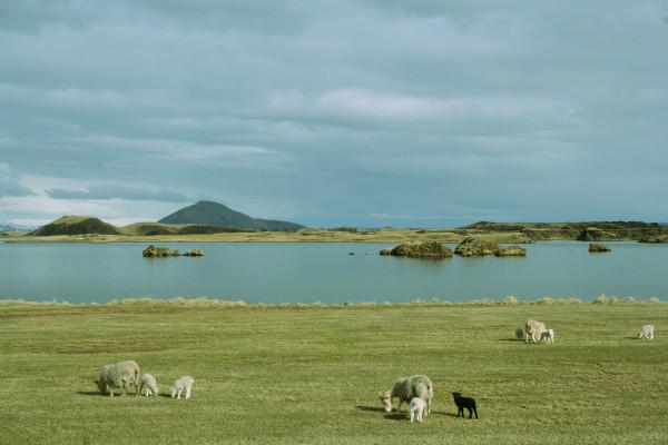 Iceland_Myvatn_2