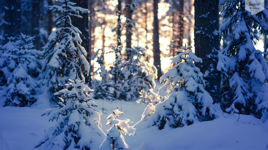Картинки тайга зимой, картинки высоком