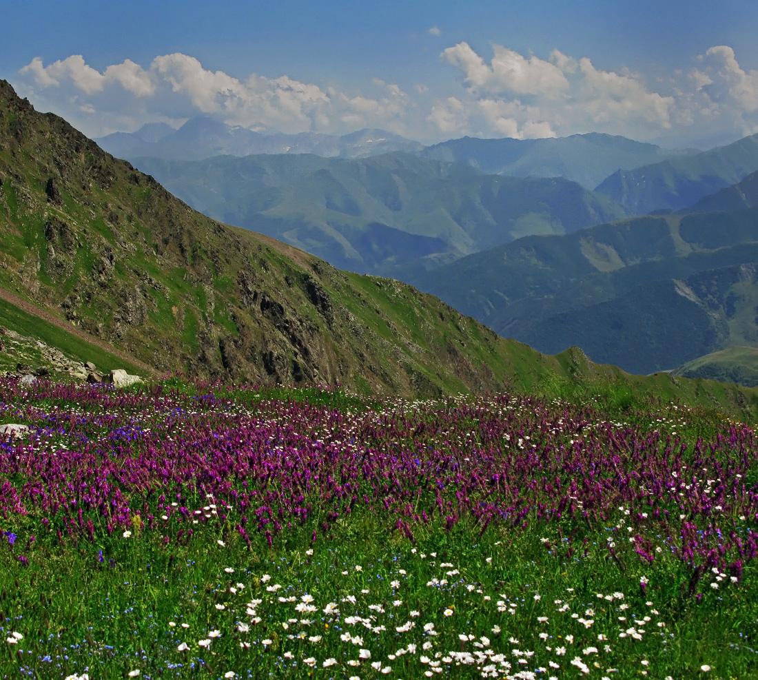 Лекарственные травы горных рек южной осетии фото