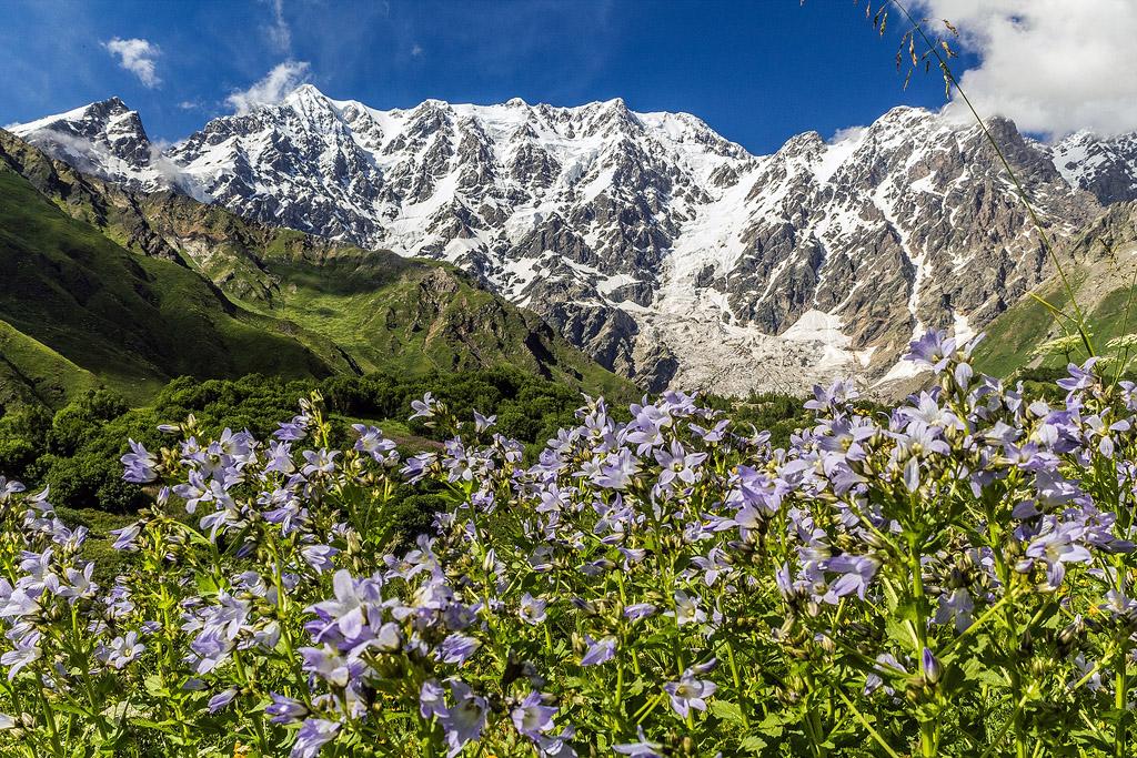 Растительность гор картинки
