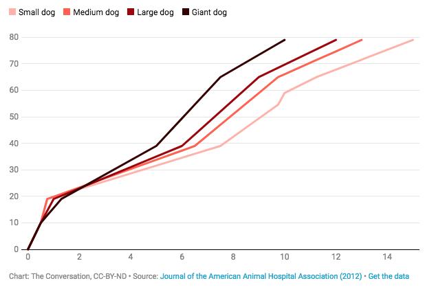 кавалергарды, век недолог примерно, Обычно, живут, стадии, находится, питомец, Кроме, правило, мелкие, собаки, крупные, дольше, понимать, кошек, такого, сильной, разницы, размерах, собак, зависимость