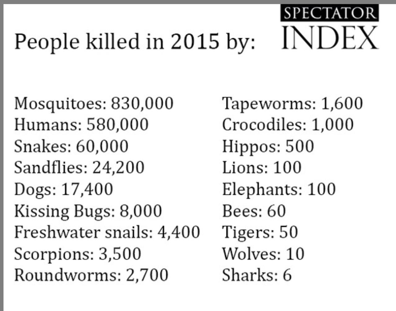 слоны и акулы