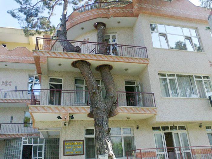 c любовью к деревьям