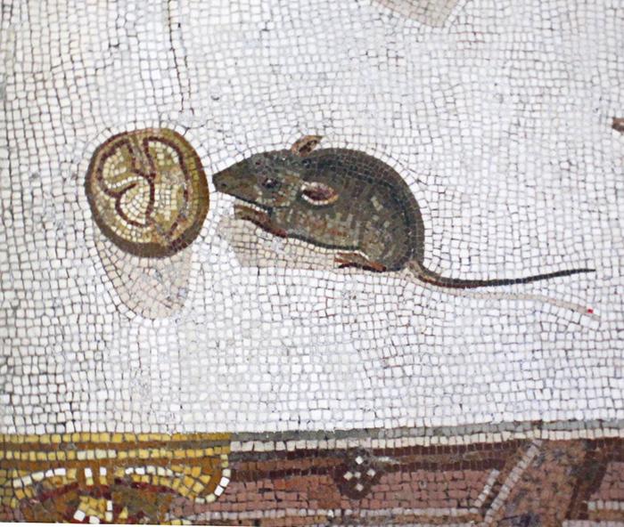 mouse asaroton