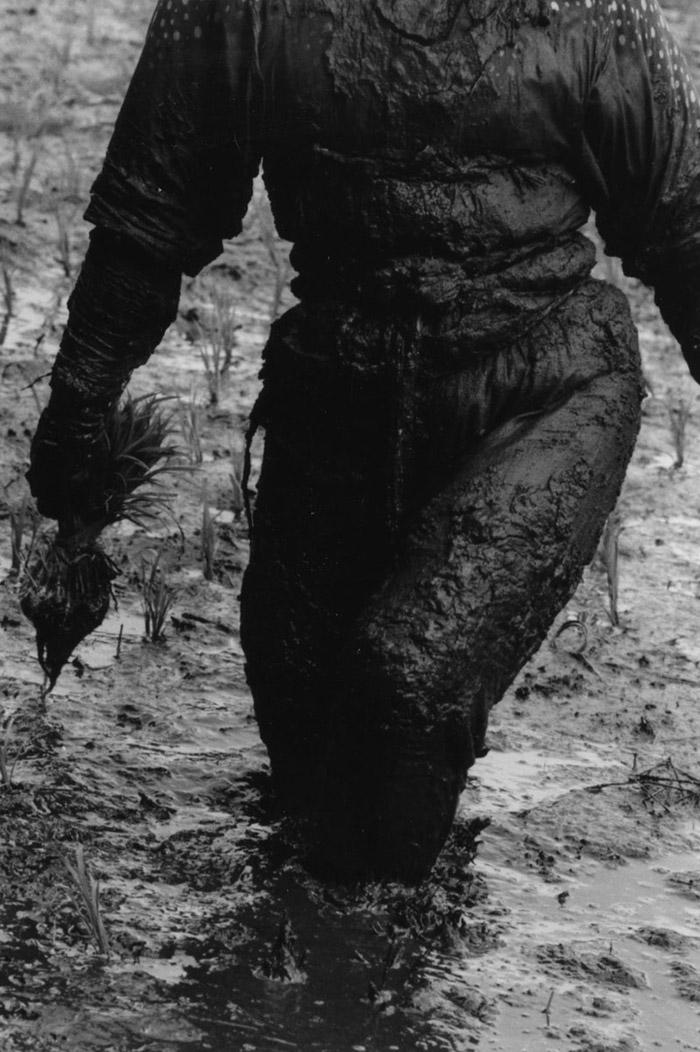 Keisuke Katano - Woman planting rice, 1955