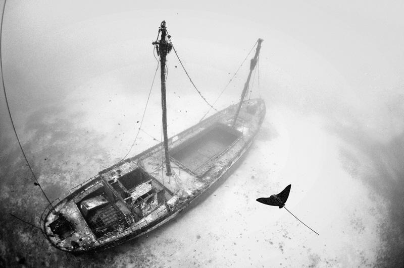 A stingray floats above the wreck of the Carthaginian, Maui Hawaii, by Douglas Hoffman, 2011.