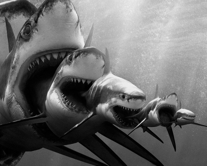 FT_sharks