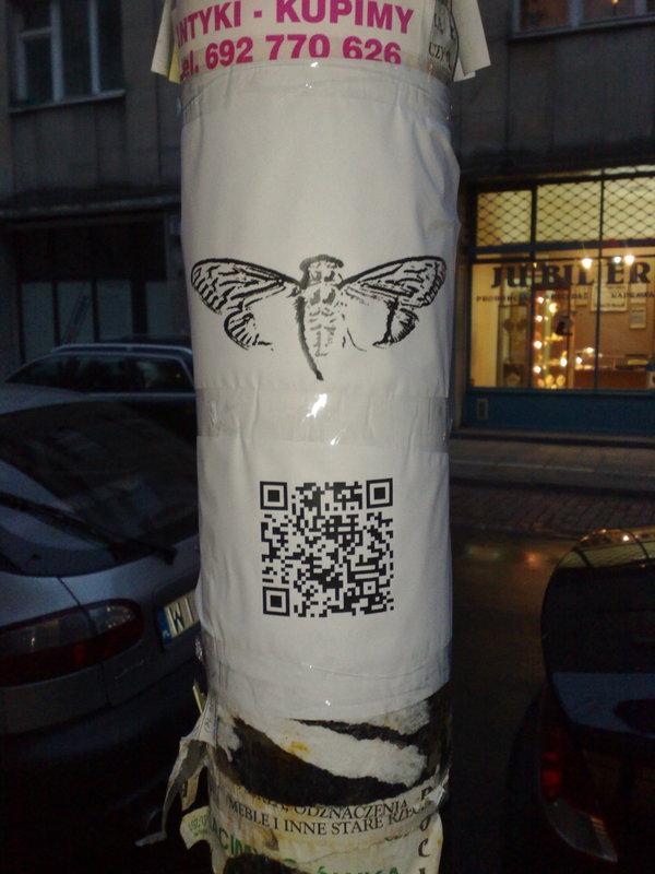 cicada-3301-05