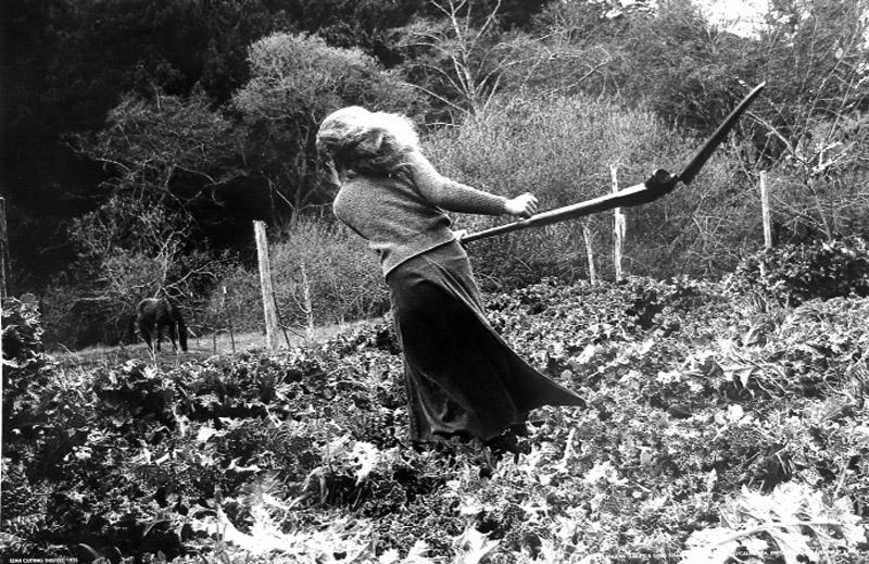 Ilka Hartmann. Leah cutting thistle. 1975