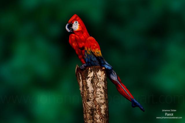 Parrot-web-640x426