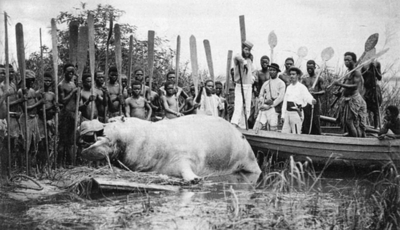 osé Augusto da Cunha Moraes, Caçada ao hipopótamo nas margens do rio Zaire, Angola,1878